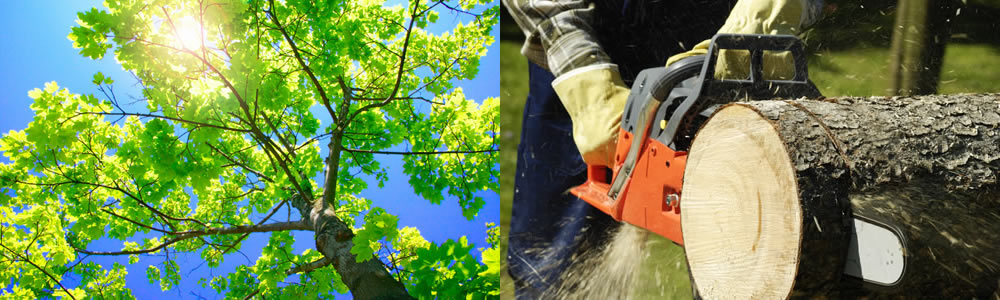 Tree Services New Palestine